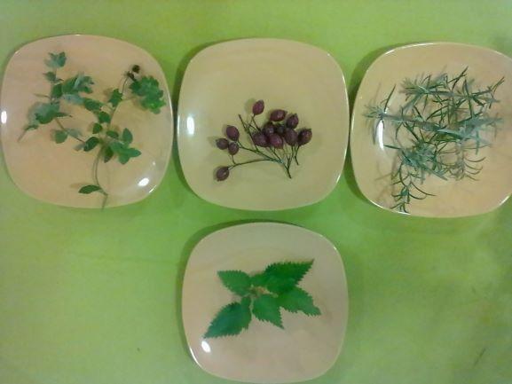 Ateliers cueillette & cuisine de plantes sauvages