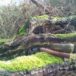 Bain de forêt - Ô Jardin des Kamis